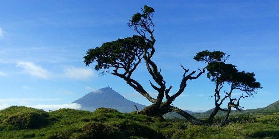 Pico's central plateau